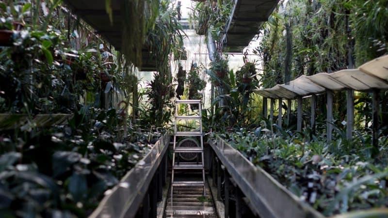 Botanischer Garten Linz