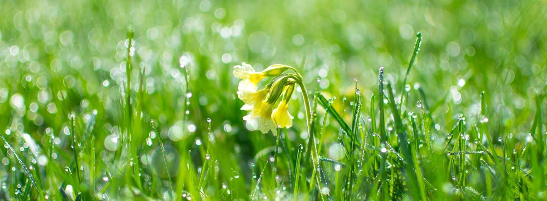 Frühlingstipps für Linz