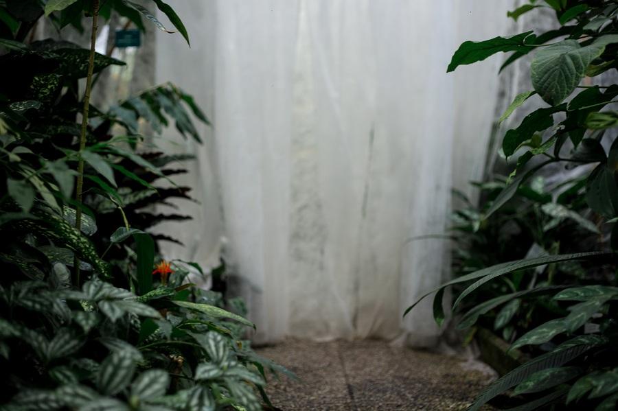 Botanischer Garten Schmetterlinge