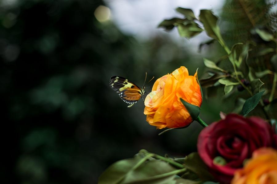 Schmetterling Ausstellung Botanischer Garten