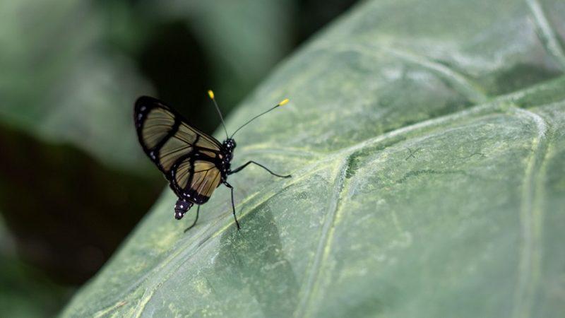 Schmetterlinge im Botanischen Garten Linz